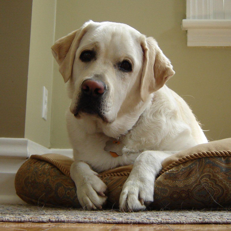 Titathink dog home alone