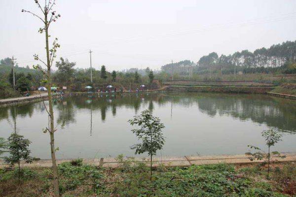 Titathink--My father's fish pond