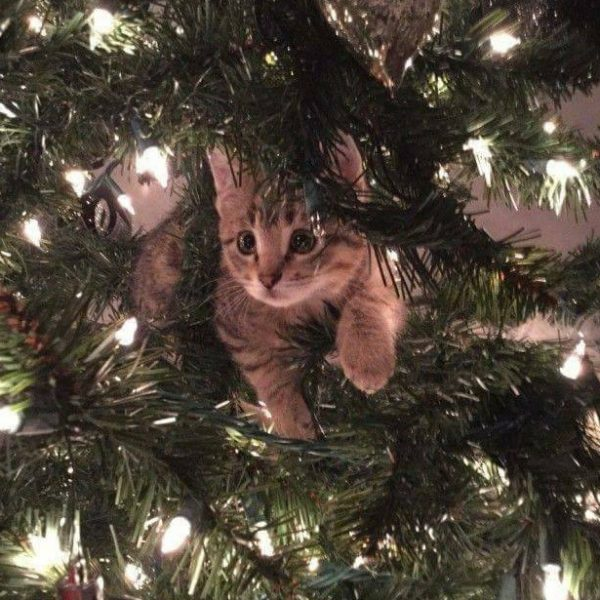 Titathink Merry Christmas